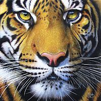58628 Puzzle Golden Tiger Face